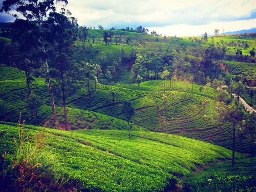 Landscape Travel Report Train Ride Kandy-Ella