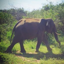 Travel Report Yala National Park