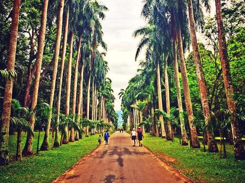 Botanic Garden Peradeniya Kandy
