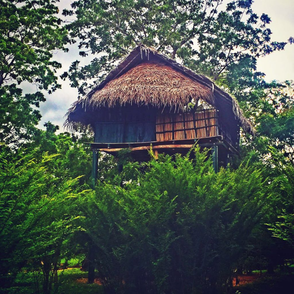 Booking accommodation in a tree house in Sri Lanka