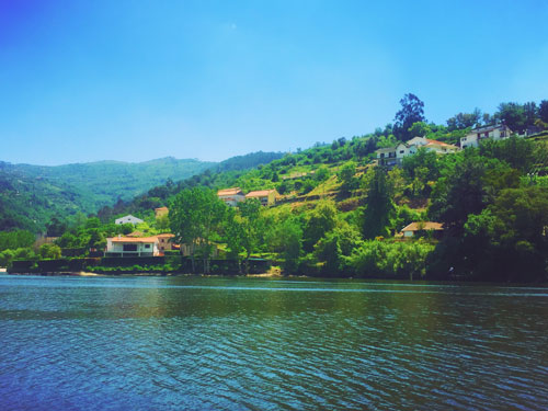 Douro River vineyards during boat trip